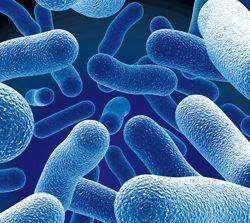Хорошие микробы