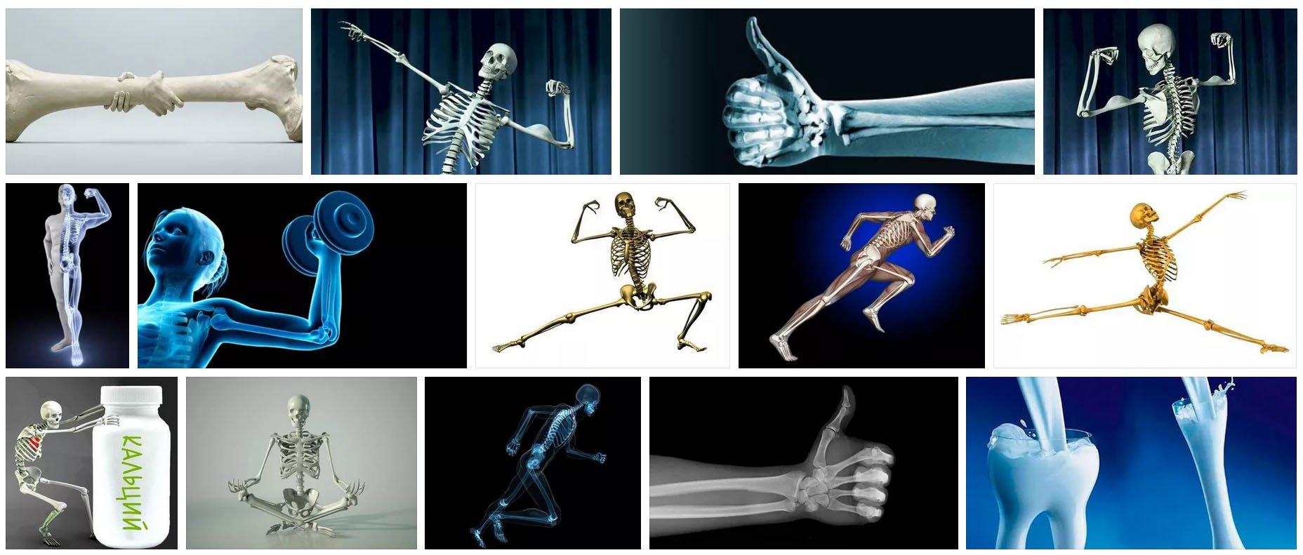 кости скелеты