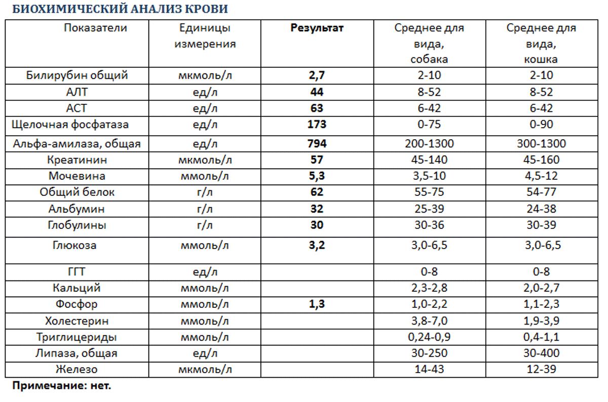 У таблица человека анализ биохимический крови в впч крови на анализ