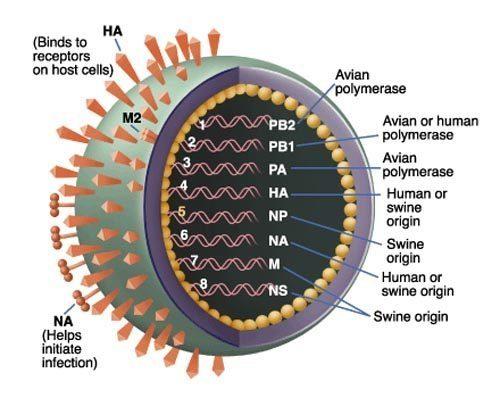 20091030_virus[1]