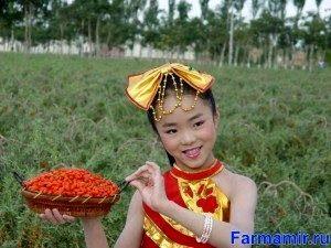 ягоды годжи китай