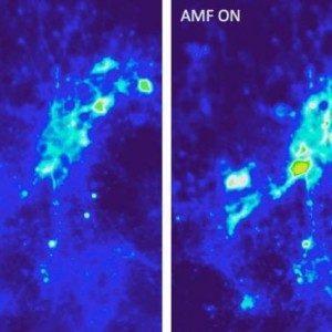 С помощью магнитных наночастиц можно стимулировать кору головного мозга беспроводным путем