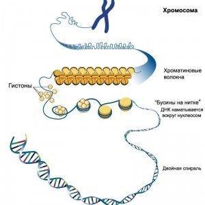 ДНК не может объяснить наследование всех биологических признаков