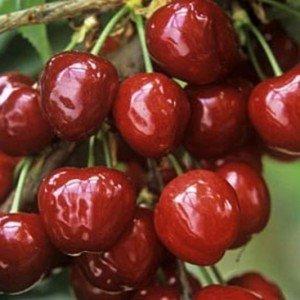 Шесть продуктов питания, с помощью которых можно бороться с воспалением