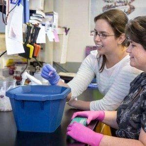 Фермент Tpl2 может быть мишенью для лечения аутоиммунных заболеваний