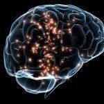 Исследователи обнаружили, как кокаин и амфетамины нарушают нормальное функционирование головного мозга