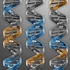 Ученые обнаружили генетическую сигнатуру, которая позволяет точно диагностировать сепсис на ранней стадии