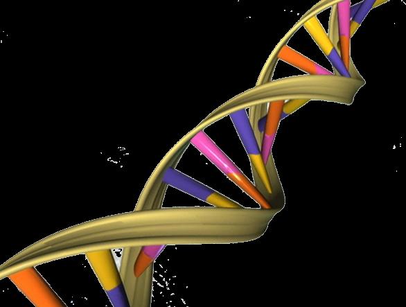 Генетические доказательства
