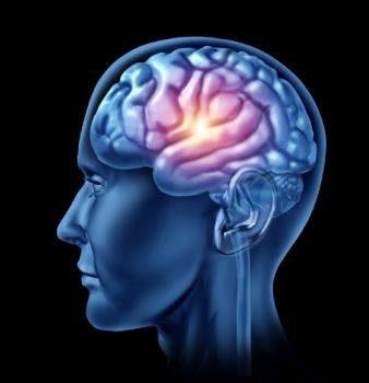 эмбриональный головной мозг