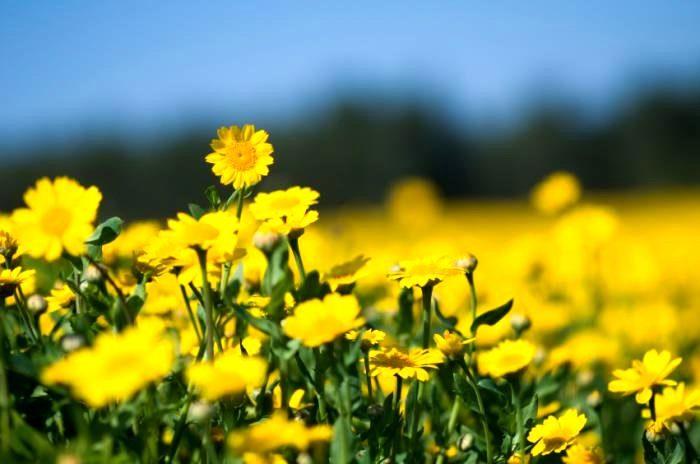пыльца вызывает аллергию