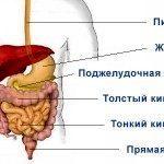 Опухоли органов пищеварения