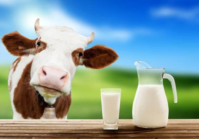 корова-и-кувшин-о-молока