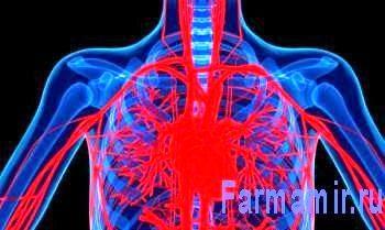 схема груди показывающая сердце и кровеностные сосуды