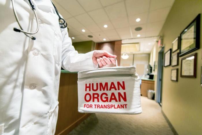 врач держит контейнер с человечиским органом