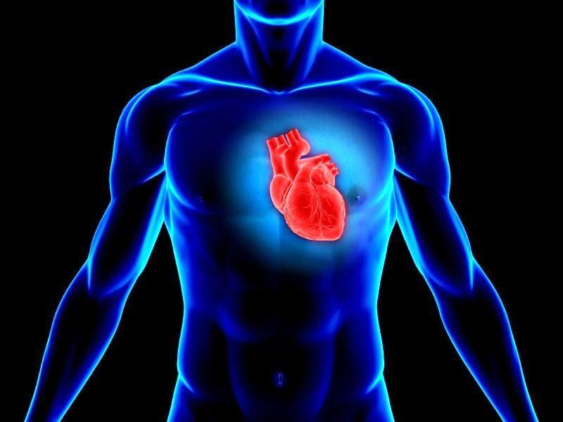 функции сердца