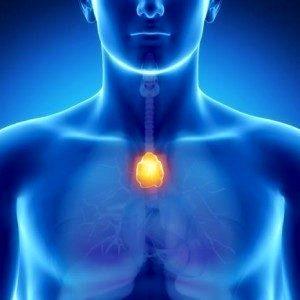 Возрастное ослабление иммунной системы замедляется при помощи антиоксидантов