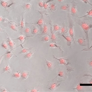 Умное химиотерапевтическое покрытие для наночастиц против опухолей