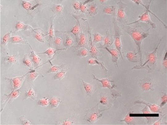наночастицы против опухоли