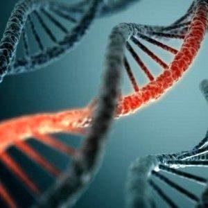 Реконструкция древнего вируса должна помочь ученым улучшить генную терапию