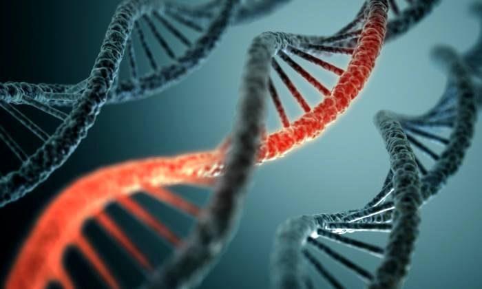 ДНК-нити