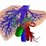 Недавно обнаруженные клетки регенерируют ткани печени без образования опухолей