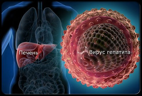 Вирус гепатита