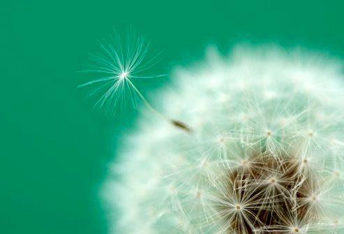 Триггеры астмы: аллергия