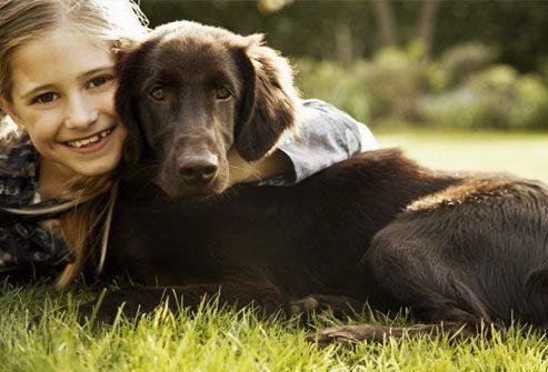 Судороги и собаки