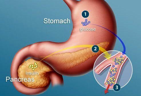 Как работает инсулин?