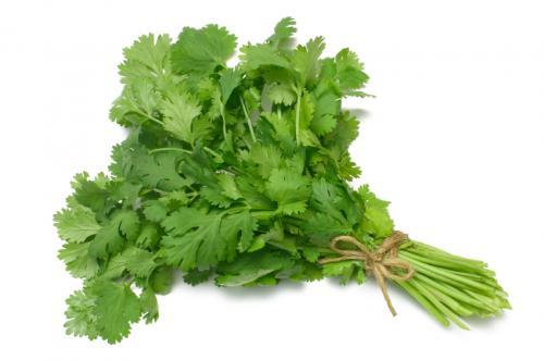 Кинза (зелень кориандра)
