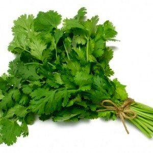 Какими полезными для здоровья свойствами обладает кинза (зелень кориандра)?