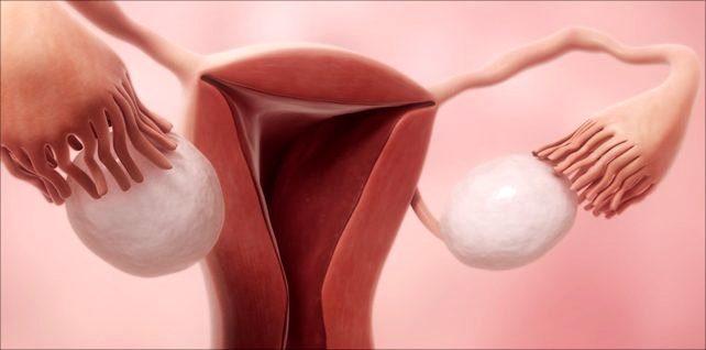 Яйцеклетка в яичниках начала процесс созревания для своего скорого оплодотворения