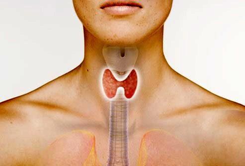 Причины выпадения волос: Проблемы с щитовидной железой