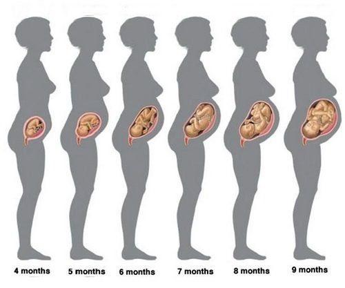 Перемены в организме беременной женщины на 23 неделе беременности
