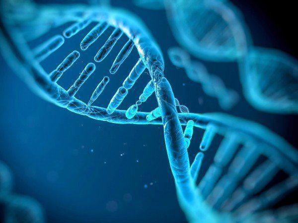 В человеческом геноме вирусы и бактерии