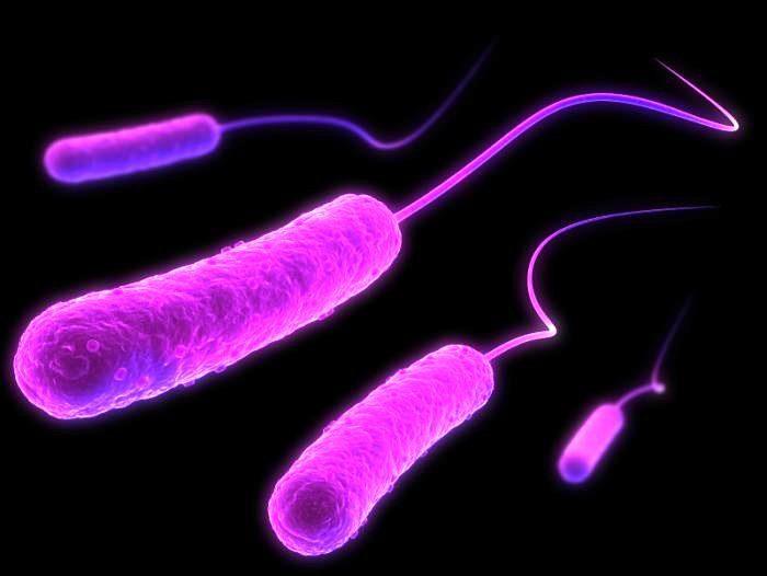 Бактериальное влияние на человеческую психологию постепенно становится центром многих научных исследований