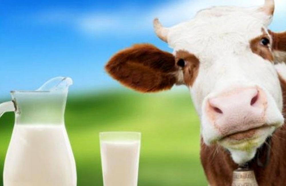 Молочный тип диеты