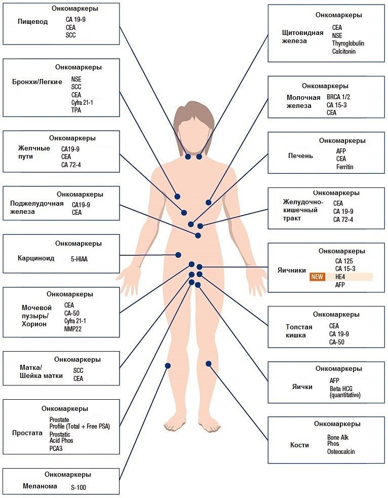 Среди наиболее часто исследуемых маркеров онкозаболеваний: