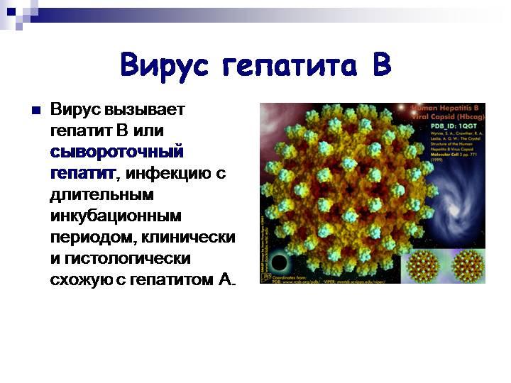 Вирус гепатита В (сывороточный гепатит)