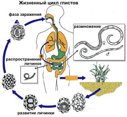 Распространенные факторы, способствующие развитию дисбактериоза
