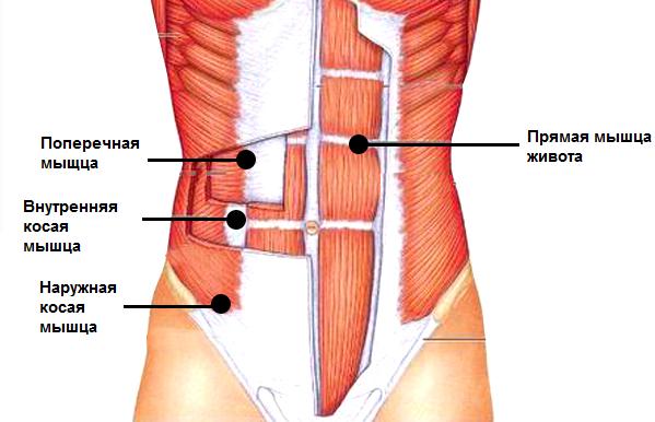 Какие мышцы живота и боков тренирует хулахуп
