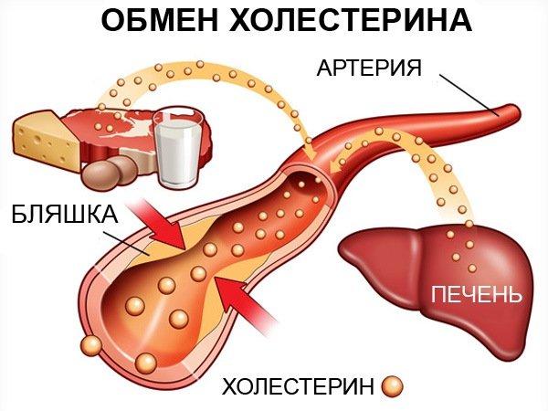 Норма холестерина: особенности, допустимые значения, советы врачей