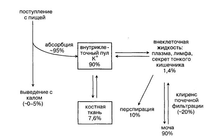 метаболизм калия