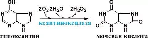 формула молибден пуринов