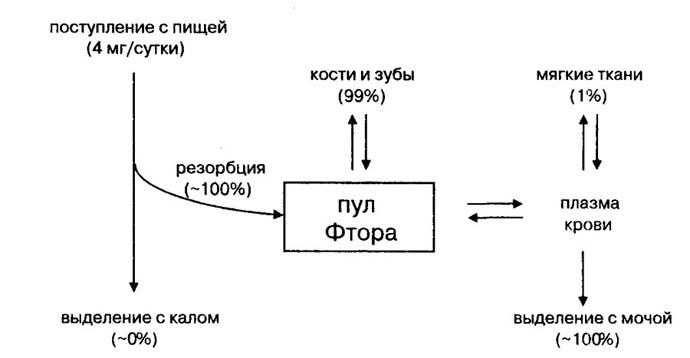 метаболизм фтора