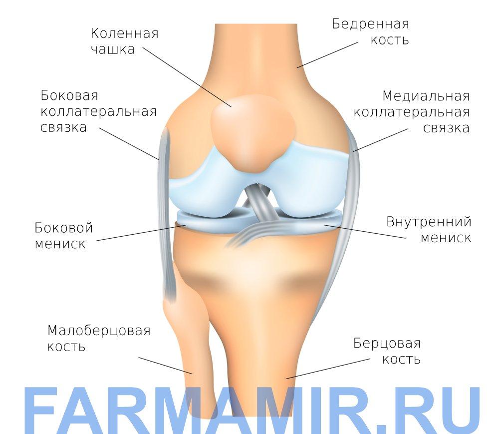 Что такое артроз коленного сустава