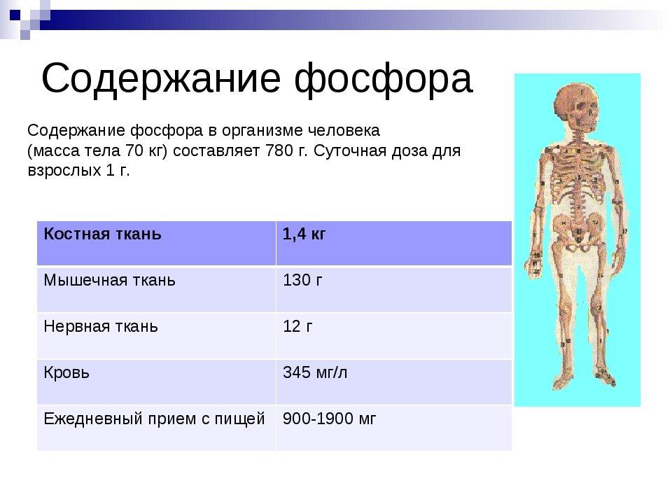 содержание в тканях фосфора