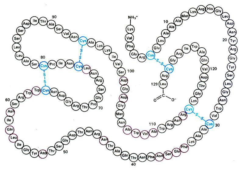 сульфгидрильных групп и дисульфидных мостиков