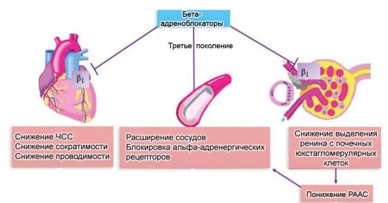 бета адреноблокаторы схема