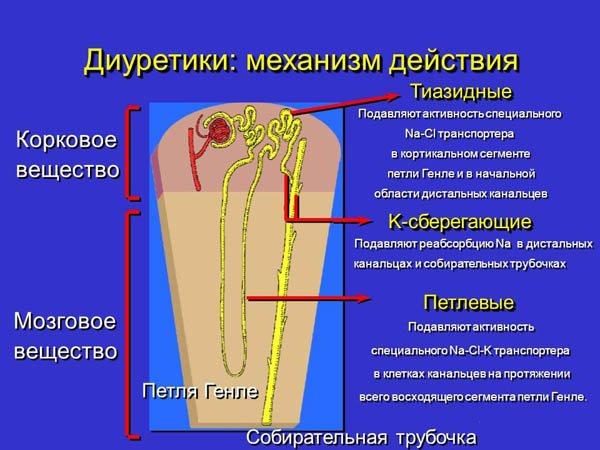 диуретики механизм действия